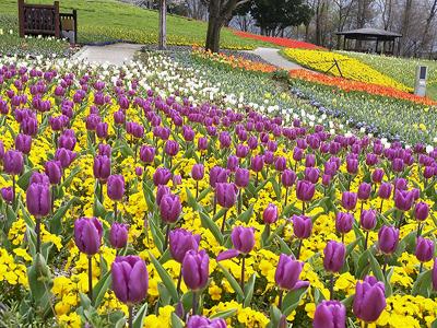 2013.03.15_まんのう公園(400.jpg